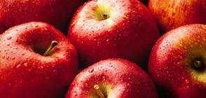 Червените ябълки изчезват заради климатичните промени