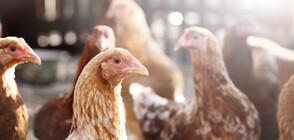 Великобритания съобщи за случай на птичи грип за първи път от 2017 година