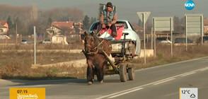 Бременна кобила дърпа тежка каруца, натоварена с кола за скрап (ВИДЕО)