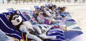 """Куба Гудинг Младши в ледени приключения със """"Снежни кучета"""" по NOVA"""