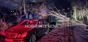 СЛЕД СИЛНИЯ ВЯТЪР В СОФИЯ: 53 сигнала за паднали клони на дървета (ВИДЕО+СНИМКИ)