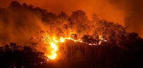 ТРАГЕДИЯ В АВСТРАЛИЯ: Горски пожари изпепелиха цял град