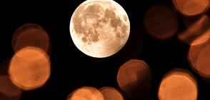 """Светът наблюдава """"Вълча"""" Луна (ВИДЕО+СНИМКИ)"""