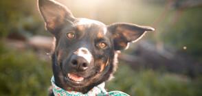ГЕРОЙСТВО: Куче спаси стадо овце от пожарите в Австралия (ВИДЕО+СНИМКИ)