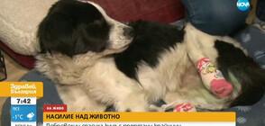Доброволци спасиха куче с отрязани крайници