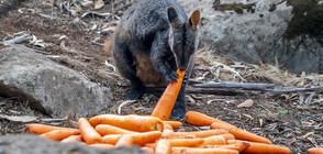 Десетки животни, засегнати от пожарите в Австралия, намериха подслон (ВИДЕО)