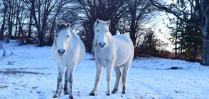 БЯЛА ФЕЕРИЯ: Красотата на зимата в снимки (ГАЛЕРИЯ)