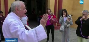В Мексико носиха домашни любимци в църквите, за да бъдат блaгословени (ВИДЕО)