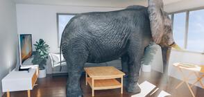 АТРАКЦИЯ: Слон се разхожда свободно в хотел (ВИДЕО)