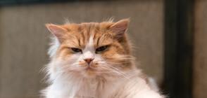 """Котка държа два дни стопанката си """"за заложник"""" в кухнята"""
