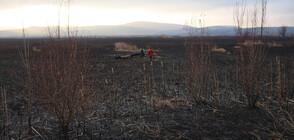 Пожарът в Драгоманското блато е овладян (ВИДЕО+СНИМКИ)
