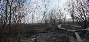 Тежки последствия след пожара в Драгоманското блато