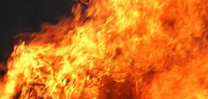 11 елитни коне изгоряха при пожар във Врачанско