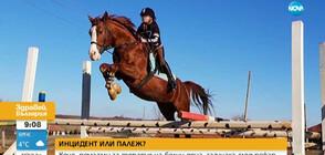 Късо съединение предизвикало пожара, при който загинаха 11 елитни коне