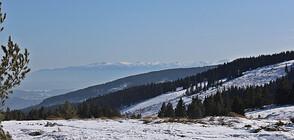Еколог посочи опасностите от зимата без сняг