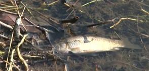 Опаковки от стари пестициди са отровили рибата в Марица