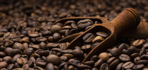 Кафе, изплюто от прилеп, е хит в Мадагаскар (ВИДЕО)