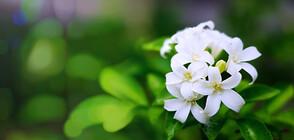 Стайни растения, които са полезни за здравето ни (ГАЛЕРИЯ)