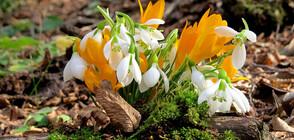 Докога ще продължи февруарската пролет?