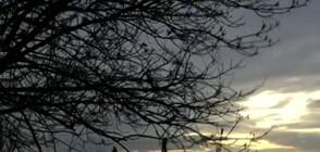 Опасен вятър изпочупи клони в Русе (ВИДЕО)