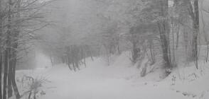 Снежна покривка от 20 сантиметра в края на седмицата