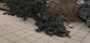 Десетки сигнали за паднали дървета и ламарини заради вятъра в София