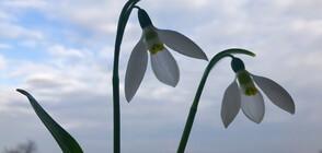 Новата седмица започва с априлски температури