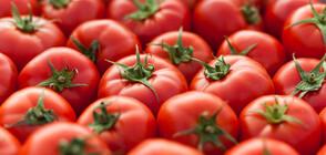 В България няма зараза от вируса на кафяво набраздяване по плодовете на доматите