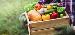 80% oт зеленчуците на пазара у нас са внос (ВИДЕО)