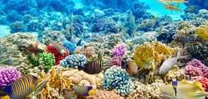 Какво ще изгуби човечеството, ако изчезнат кораловите рифове? (ГАЛЕРИЯ)