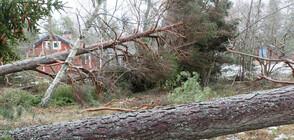 """Бурята """"Юлия"""" остави 40 000 домакинства без ток в Чехия"""