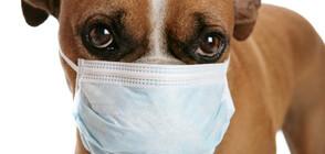 Стопанин научи кучето си да си слага маска срещу коронавируса (СНИМКА)