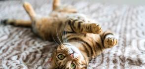 Кантарджиев: Домашните животни имат други коронавируси