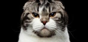 Котка със свиреп вид стана звезда в интернет (ВИДЕО+СНИМКИ)