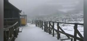 Сняг в края на лятото на остров Тасмания (ВИДЕО)
