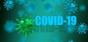 1724 new coronavirus cases in Bulgaria