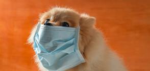 Как да предпазим домашните си любимци от коронавируса? (ВИДЕО)