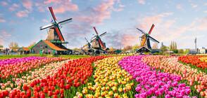 В УСЛОВИЯ НА ПАНДЕМИЯ: Нидерландското цветарство бележи загуби