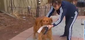 В УСЛОВИЯ НА КРИЗА: Куче стана разносвач в Колорадо