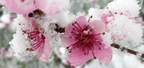 Връща ли се пролетното време?