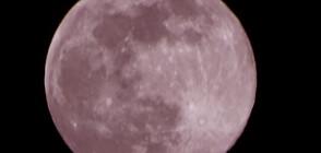 """ОТ """"МОЯТА НОВИНА"""": Наблюдавахме Супер розова Луна (ВИДЕО+СНИМКИ)"""