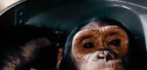 Шимпанзе е първият примат, летял в Космоса (ВИДЕО)