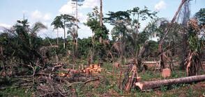 Обезлесяването в Африка продължава с тревожни темпове