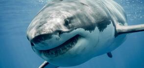 6-метрова акула плува мирно край хора близо до брега на Малага (ВИДЕО+СНИМКИ)