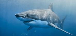 Заснеха огромна акула, която плува мирно край хора близо до брега на Малага (ВИДЕО)
