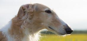 Куче с 31-сантиметров нос стана интернет звезда (ВИДЕО+СНИМКА)
