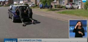 ПО УЛИЦИТЕ НА ГРАДА: Тимът по бобслей на Ямайка тренира с бутане на автомобил
