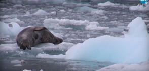 """""""Темата на NOVA"""": Антарктика - на една ръка разстояние (ВИДЕО)"""
