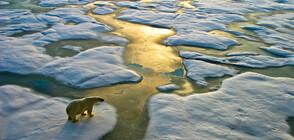 Природата след COVID-19: Вирусът може да окаже положително влияние върху климатичните промени