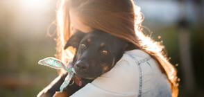 Осиновителна кампания за бездомни кучета се провежда в Бургас (ВИДЕО)